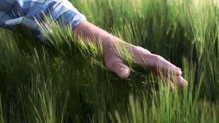 Grundstuecksbesitzer streicht mit Hand über Gras / Bautraeger